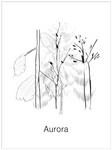 Aurora080411.jpg