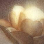 上條花梨b03