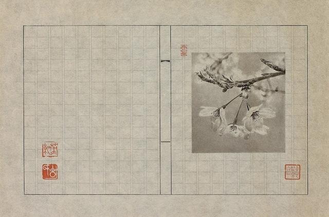 花卉画譜桜.jpeg
